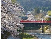 【高山・中橋】高山の代表的な橋である赤い中橋と桜が調和し、とても美しい光景が見られます。※ホテルから車で約45分