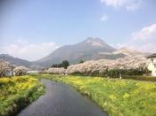 春は桜と菜の花を見ることができます。