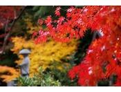 ~薬王院 紅葉イメージ~ 当館からも歩いて5分程度の立地ですので紅葉散策にお勧めですよ!