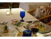 レストランではわんちゃんと一緒に椅子に座って御食事ができます、わんちゃん用の食事もあります