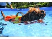 わんちゃんにライフジャケットを付けて、わんちゃん専用プールで泳がせてみませんか、