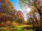 """キラキラとした日差しが""""めいいっぱい""""降り注ぐ林道♪朝の散歩にいかがですか?"""