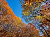 """秋といえば""""紅葉♪""""煌びやかな、紅葉の世界をお楽しみ下さい"""