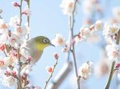 春の大阪観光に、桜を楽しめる観光名所をご案内いたします。各所へのアクセス抜群の好立地です。