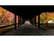 今年初めての「東福寺夜間拝観」。日中も素敵な景色が、ライトアップでどう変わるのかぜひお確かめください!