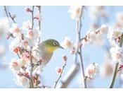暖かな春の京都へ