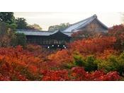 「東福寺夜間拝観」は2020年で初めての試み。是非ご自身の目でその景色をお確かめください。