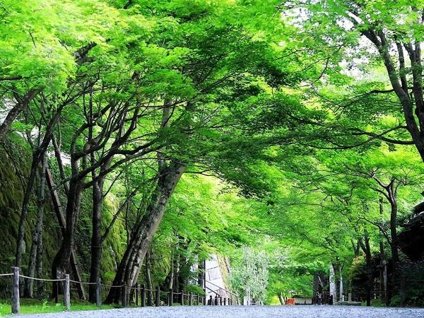 京都の夏を楽しむ