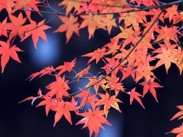 紅葉を巡る京都
