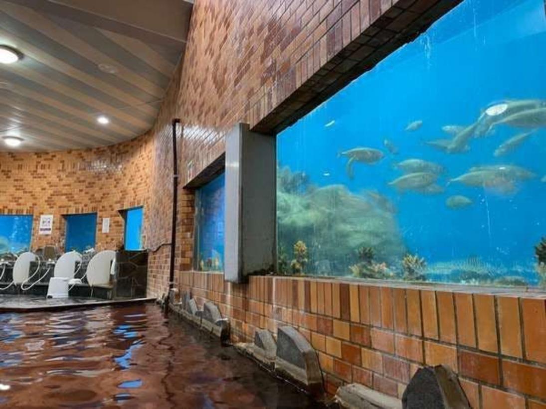 当ホテル自慢の水族館風呂です。浴場を囲む水槽で泳ぐ、海亀、魚たちを見ながら楽しめる大浴場