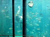 【周辺観光】下田海中水族館 ホテルより車で10分