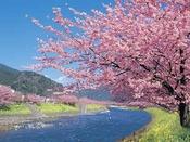 【イベント】河津桜まつり
