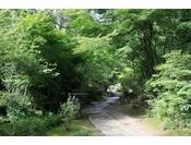新緑のシーズンは一層樹々の緑が映える癒しの空間へ。