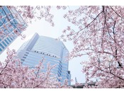 桜の季節にはホテル下の品川セントラルガーデンでお花見をお楽しみいただけます。