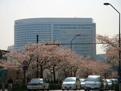 みなとみらいの桜