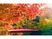 紅葉の中を散策する中野もみじ山