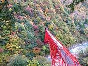 黒部峡谷・新山彦鉄橋を走り抜けるトロッコ電車。紅葉の中を走り抜けるトロッコ電車運行は11月末です。