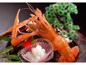 【別注料理】アカザエビの御造り  海老のプリンセスと呼ばれる高級食材《アカザエビ》はイセエビをも上回る濃厚な甘みと旨味を持つ至極の一品です。御造りで存分にご堪能下さい。 ※写真はイメージ