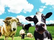 「マザー牧場」はお車で約37分。可愛い動物たちと触れ合えます。