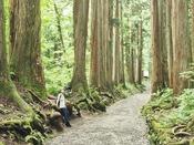【信州3大パワスポ】戸隠神社奥社・荘厳な空気に包まれた杉並木の参道