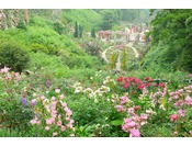 バラのベストシーズンは例年5月中旬~6月上旬 園内は芳醇なバラの香りで包まれ、600種4,000株ものバラが咲き乱れます。ホテルニューアカオへご宿泊の方は、優待料金でご入園いただけるほか、ホテルとガーデンを往復するシャトルバスがご利用いただけます。