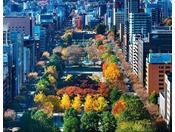 大通公園の秋は色づいた木々が札幌の街並みを彩り溢れるものにします。