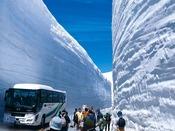 【春の立山黒部アルペンルート】雪の大谷。ダイナミックな雪の壁を体感できます。延楽から富山地方鉄道の宇奈月温泉駅まで徒歩約五分。送迎もございます。