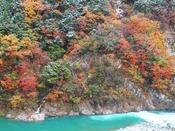 紅葉と雪と黒部川の三段染めです。