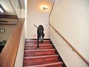 *館内/階段:一段の高さが低く、奥行きが広い、ペットに配慮した階段