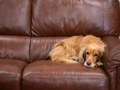 *ペットと泊まれる宿。旅先でもおうちでくつろいでいるような感覚で過ごせます。