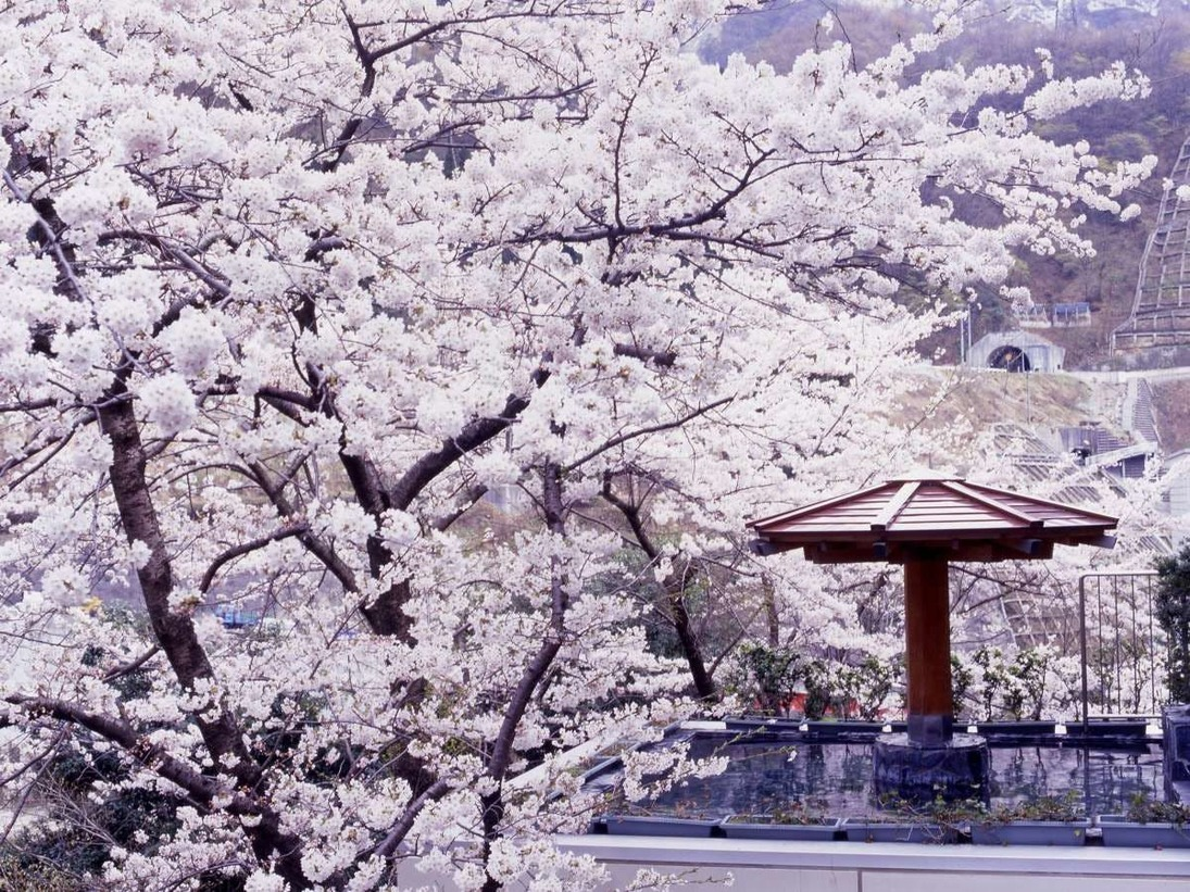 春には桜の美しさに包まれて、花びら舞う湯は凛々とした花いかだ。桜色の華やかな花見露天風呂を