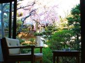 露天風呂付き松風庵「朝陽」のお部屋からは桜のお花が見えます