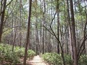 【森林浴コース・春】はホテルの周辺を囲む森林浴コースは1周2.5キロ。60分のコースです。