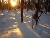 【森林浴コース・冬】草津温泉の冬は12月~3月。雪の積雪は、年によって変化がございます。