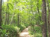 【森林浴コース・夏】緑の深い夏の森林浴は、6月下旬~8月頃でございます。