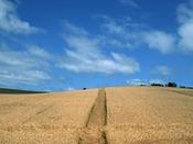 十勝の広大な畑