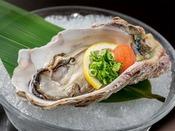 ぷるっとした大ぶりの牡蠣!レモンをサッと絞ったら、つるんと一口でお召し上がりください♪