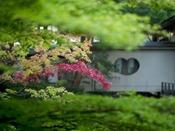 〈庭園 紅葉と茶室〉9月頃