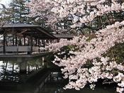 【春の庭園と渡り廊下】いつの世も季節は巡り春は訪れます。まつさきの庭園も桜の季節を迎えます。桜を愛でながら鳥の声を聞きながら、ごゆっくりとお過ごし下さい。