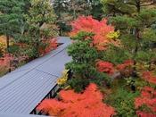 まつさきの庭園の紅葉はお客様に毎年喜んで頂いております。お部屋から間近に眺める紅葉も粋なものです。紅葉を愛でお部屋で秋の懐石をご堪能下さい。写真:本館二階より紅葉見頃/例年10月下旬から11月中旬