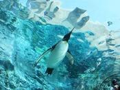 旭山動物園~ペンギン~