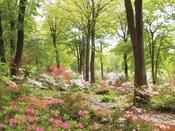 伊香保温泉宿泊プレゼント企画です。赤城自然園 特別ご招待券あります。【チェックイン前】のお立ち寄りの場合は、岸権旅館へお電話下さいませ。こちらで手続きと秘密の合言葉をお伝えいたします。
