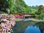 〈春の庭園つつじ〉庭園の中心にある松泉湖のまわりには、すべてつつじが植えられており、色鮮やかなつつじが皆様をお迎えいたします。春の庭園に美しく輝く花々を、是非ご覧下さい。