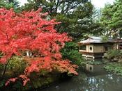 【秋の無量庵】 当館庭園の紅葉は例年10月下旬から11月中旬に見頃を迎え、お客様に喜ばれております。