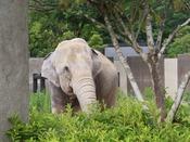 【いしかわ動物園】当館から車で約5分/日本屈指の見やすい動物園としても人気