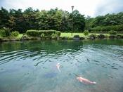 庭園の池には鯉も泳いでいます。