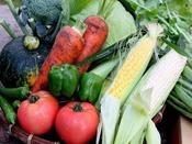【食材は地元近郊から】収穫時期、お食事の素材は地元近郊の新鮮野菜を使用致します。
