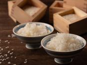 米どころ新潟ならでは!新潟県産コシヒカリの食べ比べ