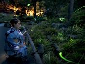 夜の庭園でホタル祭り(6月中旬~7月上旬)
