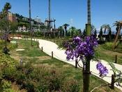 世界三大花木ジャガランタのプロロムナード(当館目の前)6月中旬が見頃です